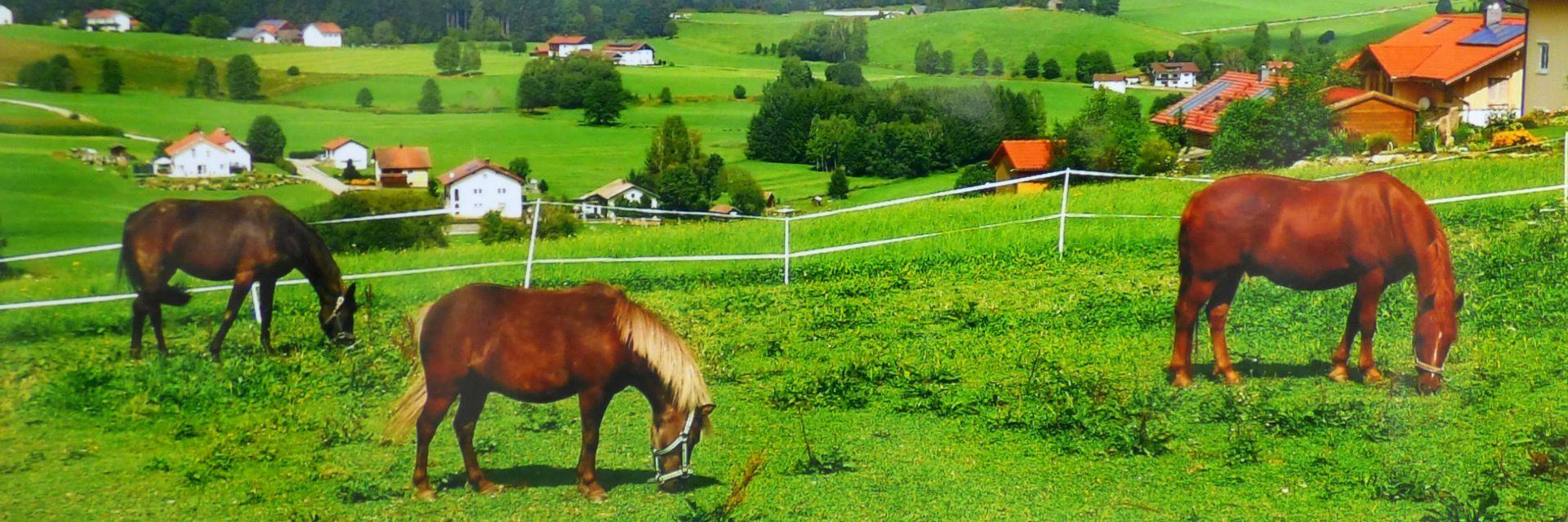 reiterferien-bayerischer-wald-reiturlaub-pferde