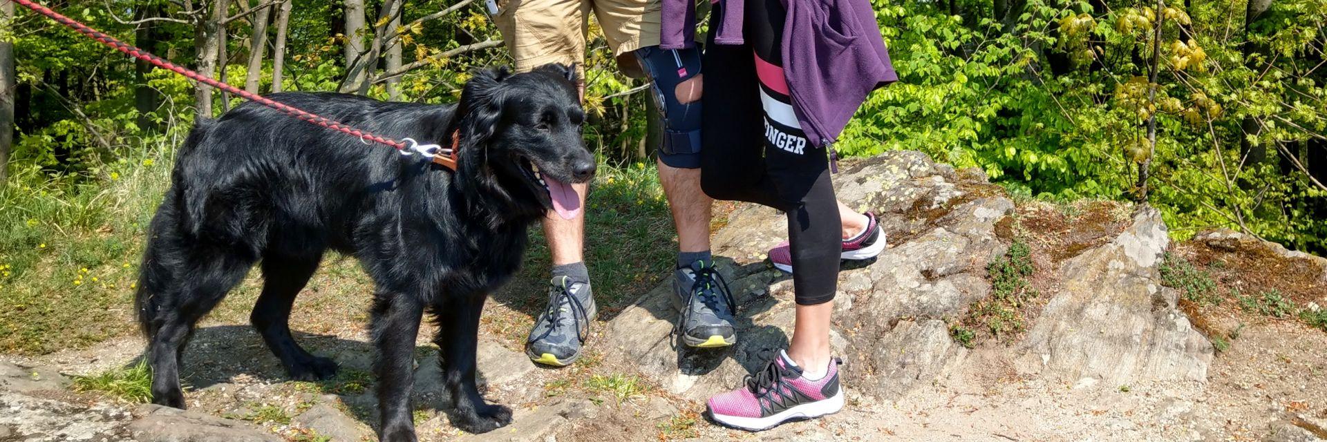 urlaub-mit-hund-bayerischer-wald-hundefreundliche-unterkunft